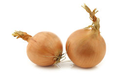 Two brown onions Royalty Free Stock Photography