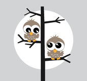 Two brown owl owls in a tree Stock Photography