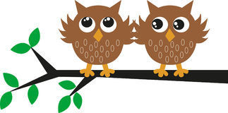 Two brown owl sitting on branch stock photography