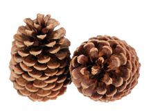 Two Brown pine cone Royalty Free Stock Photos