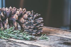 Two Brown Pine Cones on Brown Wooden Surface Royalty Free Stock Photos