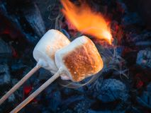Two brown sweet marshmallows roasting over fire flames. Marshmallow on skewers roasted on charcoals.  Stock Photo