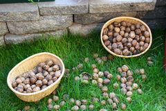 Two Buckets filled with fresh Walnuts Royalty Free Stock Photo