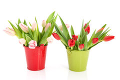 Two buckets with tulips Stock Image