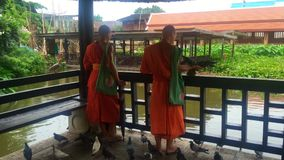 Two Buddhist monks feeding pigeons in the temple grounds stock video footage