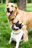 Two buddies Royalty Free Stock Photography