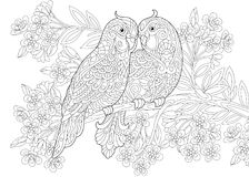 Two budgie parrots in love Royalty Free Stock Photos