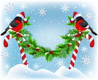 Two bullfinch  sitting on Christmas candy garland Stock Images
