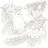 Two bullfinch sitting on fir branches with cones, guelder rose anti stress. Black and white vector illustration Royalty Free Stock Photography