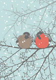 Two Bullfinches Royalty Free Stock Images