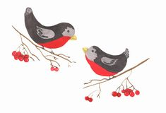 Two bullfinches on the rowan`s branches. Watercolor illustration of two bullfinches in love on the rowan branches Stock Images