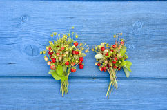 Two bunch wild strawberry on blue wooden table background Stock Photos