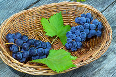 two bunches of blue grapes with green leaves Stock Image