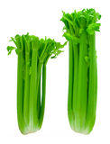 Two Bunches of Celery Royalty Free Stock Photos