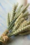 Two bunches of grain on light blue table Stock Photography