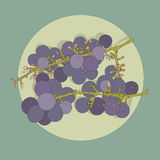 Two bunches of grapes on a plate Stock Image