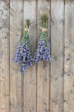 Two bunches of lavender Stock Images