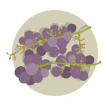Two bunches of  purple grape Stock Photo