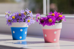 Two bunches of small purple chrysanthemums in spotted flowerpots Royalty Free Stock Photos