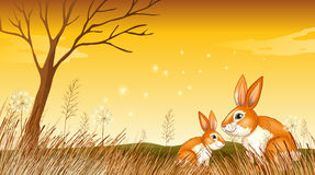 Two bunnies near the grasses Royalty Free Stock Photography