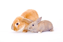 Two bunny Stock Photos