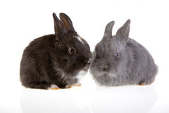 Two bunny Royalty Free Stock Photos