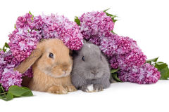 Two bunny among the lilac Royalty Free Stock Photography