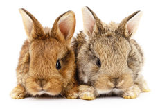 Two bunny rabbits. Image of a two bunny rabbits royalty free stock photography