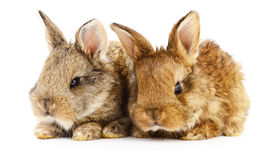 Two bunny rabbits. Image of a two bunny rabbits Stock Photos