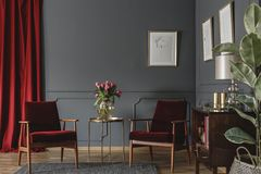 Two burgundy armchairs placed in grey living room interior with. Red drape. molding on the wall with posters, fresh flowers in glass vase and wooden cupboard stock images