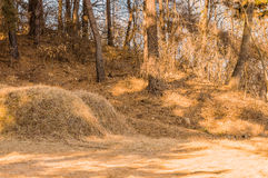 Two burial mounds in a wooded area Royalty Free Stock Images