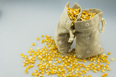 Two burlap sacks of golden corn. There are scattered corn on the desktop Royalty Free Stock Image