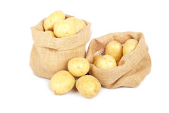 Two burlap sacks with potatoes Stock Images