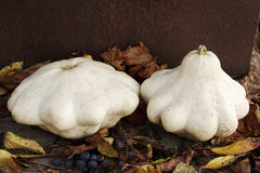 Two bush pumpkins Stock Image