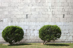 Two bushes in front of stone wall. Two rounded bushes in front of empty stone wall Stock Photo