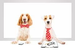 Two business dogs. Two attractive business dogs in the office Stock Photo