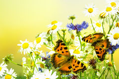 Two butterflies on camomiles Stock Photography