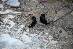 Two butterflies dancing infant of each other on the stones near the water royalty free stock photos
