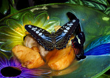 Two Butterflies Eating Stock Images