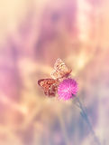 Two butterflies on the flower Stock Images