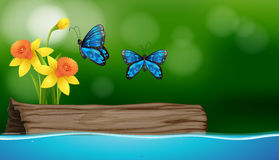 Two butterflies flying over the river Stock Photo