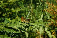 Two butterflies in the forest stock image