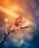 Two butterflies in love Stock Photography