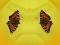 Two butterflies on yellow background Royalty Free Stock Photo