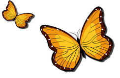 Two butterfly. Big and small butterfly in air Royalty Free Stock Images