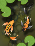 Two butterfly koi in pond Stock Photography