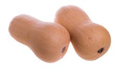 Two butternut squash isolated on white Stock Photography