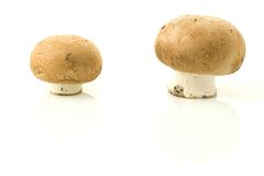 Two button mushrooms. Side view of two button mushrooms isolated on white background Stock Image