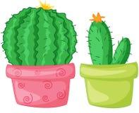 Two cacti. In feminine flower pots Stock Images