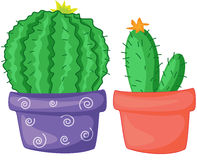 Two cacti. In colourful pots Stock Photos
